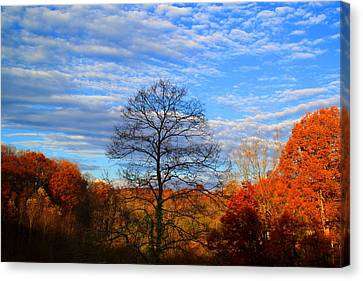 Canvas Print featuring the photograph Treetops Sunrise by Kathryn Meyer