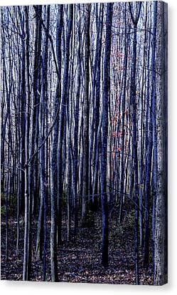 Treez Blue Canvas Print