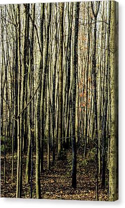 Treez Yellow Canvas Print