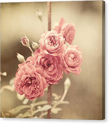 Trellis Roses Canvas Print by Lisa Russo