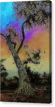 Canvas Print featuring the photograph Trembling Tree by Lori Seaman