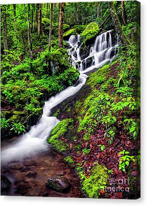 Tremont Area Waterfall Canvas Print by Madonna Martin