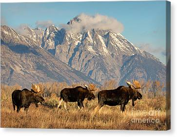 Tres Amigos Canvas Print by Aaron Whittemore