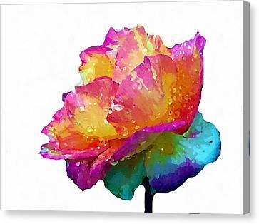 Tri Color Rose Canvas Print by Joseph Frank Baraba