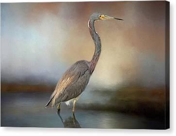 Tri-coloured Heron Canvas Print
