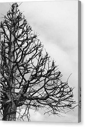 Triangle Tree Canvas Print by Linda Woods