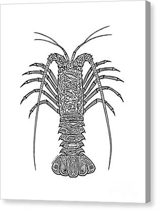 Tribal Spiny Lobster Canvas Print