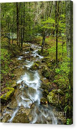 Tributary Back Fork Of Elk River Canvas Print by Thomas R Fletcher