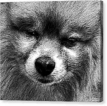 Tribute To Jojo Rip Buddy Canvas Print