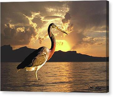 Tricolored Heron At Sunset Canvas Print by David Salter