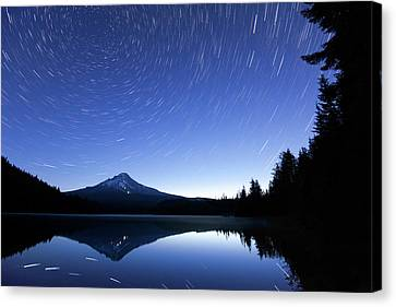 Trillium Blues Canvas Print by Patrick Campbell