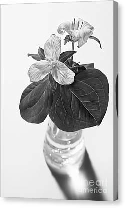 Trilliums In A Vase  Canvas Print by Masako Metz