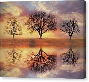 Trio Of Trees Canvas Print by Lori Deiter