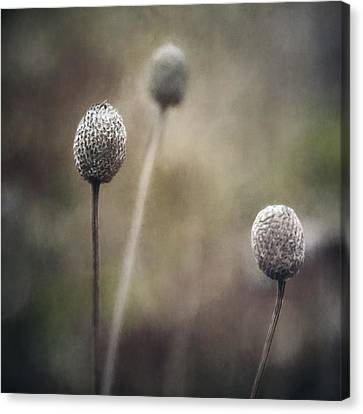 Trio Canvas Print by Scott Norris