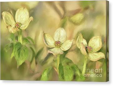 Canvas Print featuring the digital art Triple Dogwood Blossoms In Evening Light by Lois Bryan