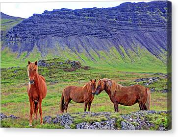 Canvas Print featuring the photograph Triple Horses by Scott Mahon
