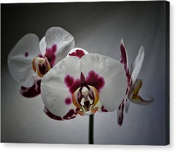 Canvas Print featuring the photograph Triplets by Karen Stahlros