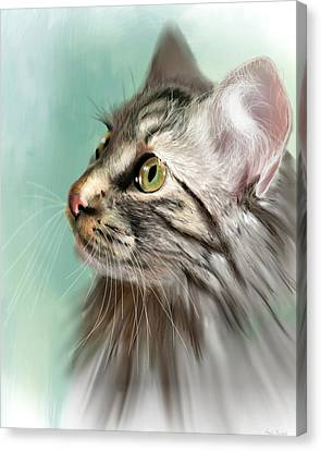Trixie The Maine Coon Cat Canvas Print by Angela Murdock
