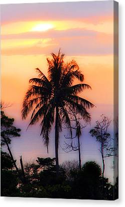 Tropical 6 Canvas Print by Mark Ashkenazi