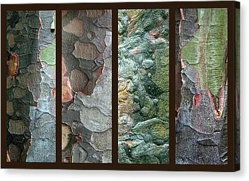 Bark Design Canvas Print - Tropical Bark Collage II by Jessica Jenney