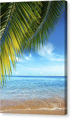 Tropical Beach Canvas Print by Carlos Caetano