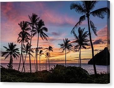 Tropical Bliss Canvas Print by Grant Taylor