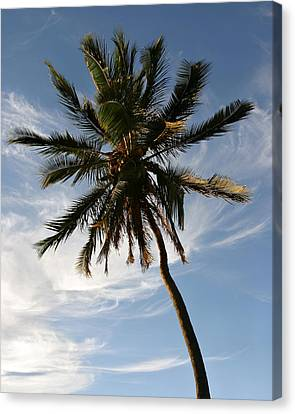 Tropical Coconut Palm Tree Maui Hawaii Canvas Print by Pierre Leclerc Photography