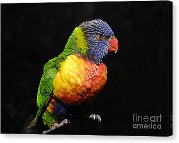 Tropical Colors Canvas Print by David Lee Thompson