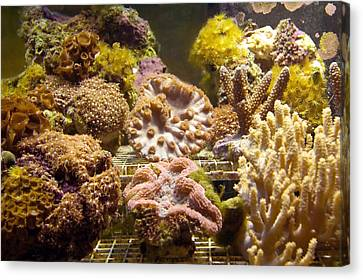Tropical Fish Tank 10 Canvas Print by Steve Ohlsen