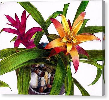 Bromeliads Indoor Flower Canvas Print