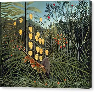 Tropical Forest  Battling Tiger And Buffalo Canvas Print by Henri Rousseau