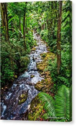 Canvas Print - Tropical Forest Stream by Christopher Holmes