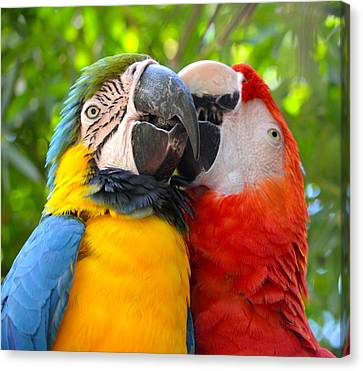 Tropical Kisses Canvas Print by Richard Bryce and Family
