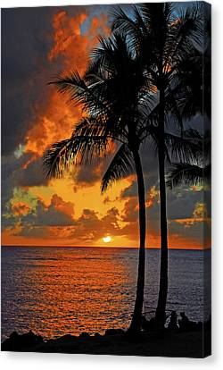 Tropical Nights  Canvas Print by Lynn Bauer