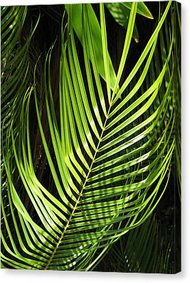 Canvas Print featuring the photograph Tropical Palm by Carol Sweetwood