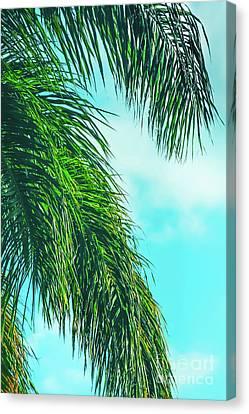 Tropical Palms Maui Hawaii Canvas Print by Sharon Mau