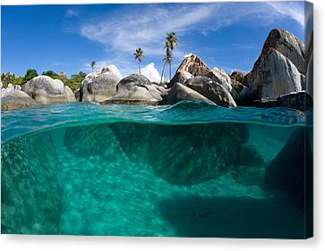 Michael Sweet Canvas Print - Tropical Paradise by Michael Sweet