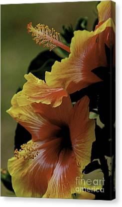 Canvas Print featuring the photograph Tropical Punch by Lori Mellen-Pagliaro