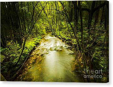 Eco-tourism Canvas Print - Tropical Rainforest Stream by Jorgo Photography - Wall Art Gallery