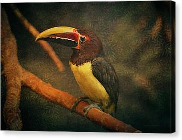 Tropical Rainforest Toucan  Canvas Print by Maria Angelica Maira