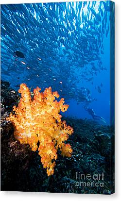 Tropical Reef Scene Canvas Print by Dave Fleetham - Printscapes