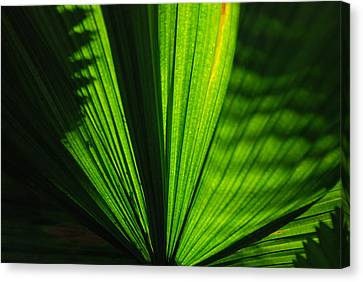 Tropical Canvas Print by Renee Holder