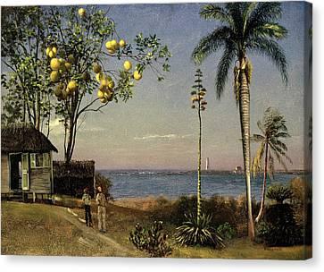 Tropical Scene Canvas Print by Albert Bierstadt