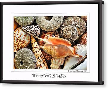 Tropical Shells... Greeting Card Canvas Print by Kaye Menner