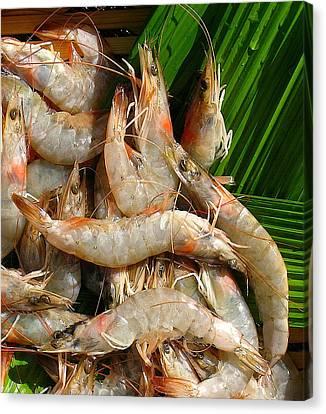 Canvas Print - Tropical Shrimp by James Temple