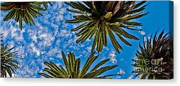 Tropical Skies Canvas Print by Az Jackson