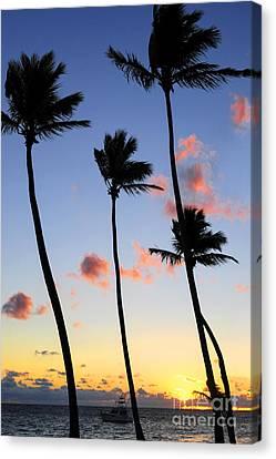 Tropical Sunrise Canvas Print by Elena Elisseeva