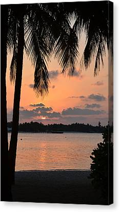Tropical Sunset Canvas Print by Corinne Rhode