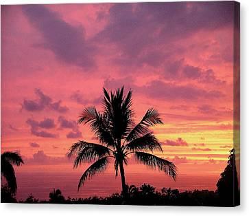 Tropical Sunset Canvas Print by Karen Nicholson