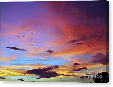 Tropical North Queensland Sunset Splendor  Canvas Print by Kerryn Madsen-Pietsch